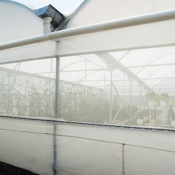 Greenhouse from Outside, Rain Water Distribution