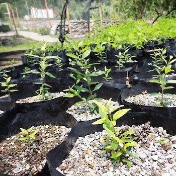 Plants for Reforestation